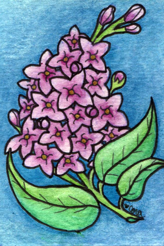 Lilac2_LR