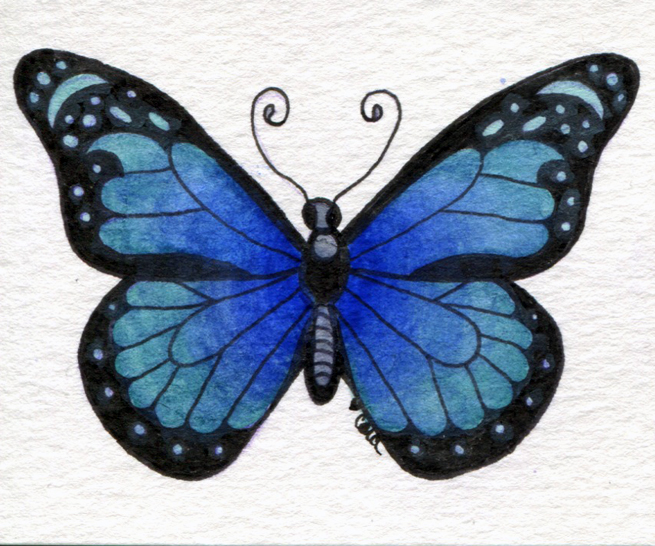 butterflyNo4